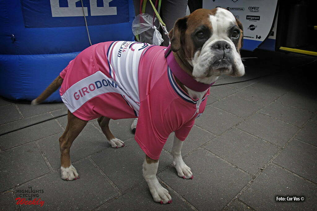 Otterlo - Netherlands - wielrennen - cycling - radsport - cyclisme - a dog in pink outfit pictured during Greet and meet team Giant - Alpecin 2 day's before the start of the Giro D'Italia in Otterlo, the Netherlands - photo Carla&Cor Vos © 2016